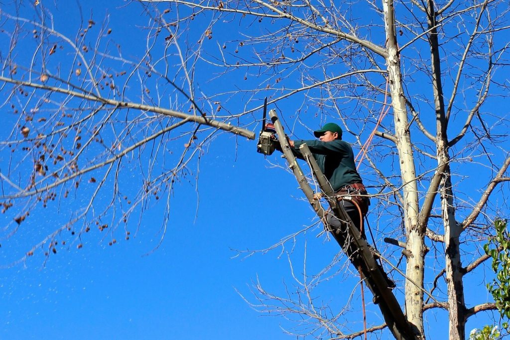 Contact Us-Doral FL Tree Trimming and Stump Grinding Services-We Offer Tree Trimming Services, Tree Removal, Tree Pruning, Tree Cutting, Residential and Commercial Tree Trimming Services, Storm Damage, Emergency Tree Removal, Land Clearing, Tree Companies, Tree Care Service, Stump Grinding, and we're the Best Tree Trimming Company Near You Guaranteed!