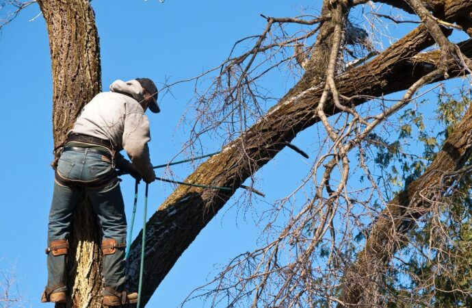 Doral FL Tree Trimming and Stump Grinding Services Home Page-We Offer Tree Trimming Services, Tree Removal, Tree Pruning, Tree Cutting, Residential and Commercial Tree Trimming Services, Storm Damage, Emergency Tree Removal, Land Clearing, Tree Companies, Tree Care Service, Stump Grinding, and we're the Best Tree Trimming Company Near You Guaranteed!