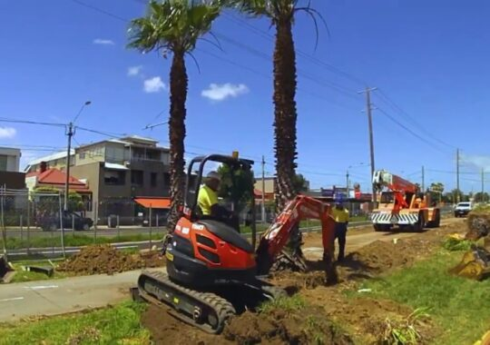 Palm Tree Removal-Doral FL Tree Trimming and Stump Grinding Services-We Offer Tree Trimming Services, Tree Removal, Tree Pruning, Tree Cutting, Residential and Commercial Tree Trimming Services, Storm Damage, Emergency Tree Removal, Land Clearing, Tree Companies, Tree Care Service, Stump Grinding, and we're the Best Tree Trimming Company Near You Guaranteed!