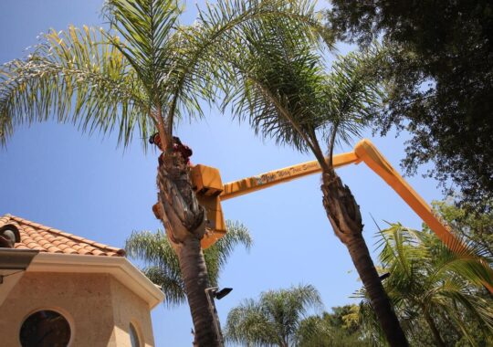 Palm Tree Trimming-Doral FL Tree Trimming and Stump Grinding Services-We Offer Tree Trimming Services, Tree Removal, Tree Pruning, Tree Cutting, Residential and Commercial Tree Trimming Services, Storm Damage, Emergency Tree Removal, Land Clearing, Tree Companies, Tree Care Service, Stump Grinding, and we're the Best Tree Trimming Company Near You Guaranteed!