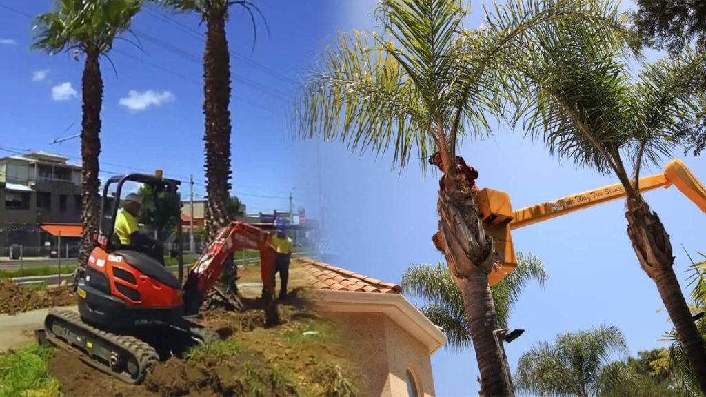 Palm tree trimming & palm tree removal-Doral FL Tree Trimming and Stump Grinding Services-We Offer Tree Trimming Services, Tree Removal, Tree Pruning, Tree Cutting, Residential and Commercial Tree Trimming Services, Storm Damage, Emergency Tree Removal, Land Clearing, Tree Companies, Tree Care Service, Stump Grinding, and we're the Best Tree Trimming Company Near You Guaranteed!