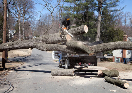 Residential Tree Services-Doral FL Tree Trimming and Stump Grinding Services-We Offer Tree Trimming Services, Tree Removal, Tree Pruning, Tree Cutting, Residential and Commercial Tree Trimming Services, Storm Damage, Emergency Tree Removal, Land Clearing, Tree Companies, Tree Care Service, Stump Grinding, and we're the Best Tree Trimming Company Near You Guaranteed!