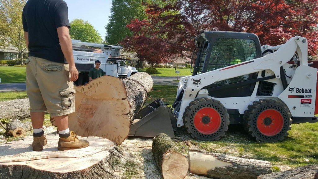 Services-Doral FL Tree Trimming and Stump Grinding Services-We Offer Tree Trimming Services, Tree Removal, Tree Pruning, Tree Cutting, Residential and Commercial Tree Trimming Services, Storm Damage, Emergency Tree Removal, Land Clearing, Tree Companies, Tree Care Service, Stump Grinding, and we're the Best Tree Trimming Company Near You Guaranteed!
