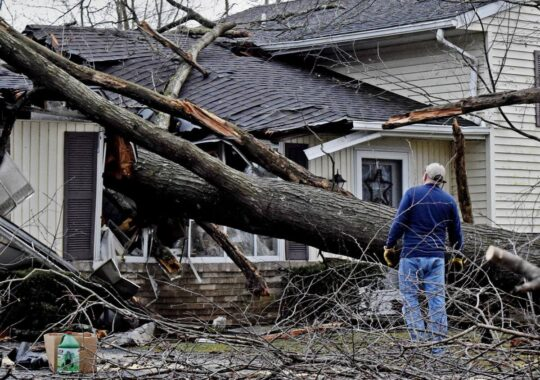 Storm Damage-Doral FL Tree Trimming and Stump Grinding Services-We Offer Tree Trimming Services, Tree Removal, Tree Pruning, Tree Cutting, Residential and Commercial Tree Trimming Services, Storm Damage, Emergency Tree Removal, Land Clearing, Tree Companies, Tree Care Service, Stump Grinding, and we're the Best Tree Trimming Company Near You Guaranteed!