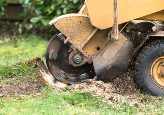 Stump Grinding-Doral FL Tree Trimming and Stump Grinding Services-We Offer Tree Trimming Services, Tree Removal, Tree Pruning, Tree Cutting, Residential and Commercial Tree Trimming Services, Storm Damage, Emergency Tree Removal, Land Clearing, Tree Companies, Tree Care Service, Stump Grinding, and we're the Best Tree Trimming Company Near You Guaranteed!