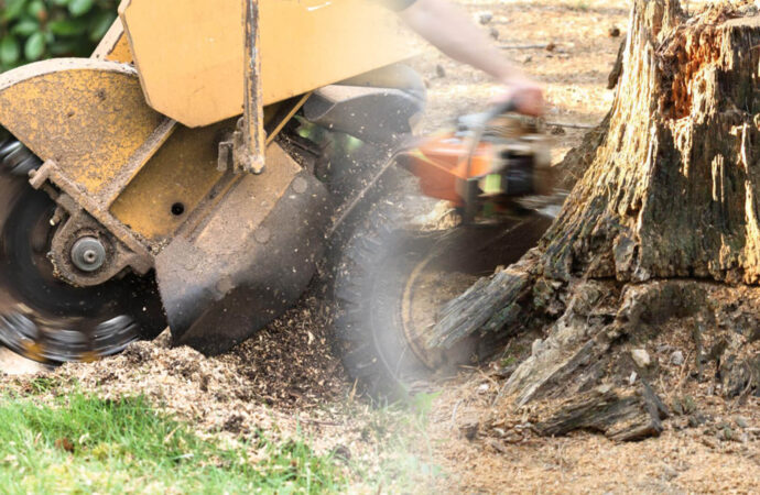 Stump grinding & removal-Doral FL Tree Trimming and Stump Grinding Services-We Offer Tree Trimming Services, Tree Removal, Tree Pruning, Tree Cutting, Residential and Commercial Tree Trimming Services, Storm Damage, Emergency Tree Removal, Land Clearing, Tree Companies, Tree Care Service, Stump Grinding, and we're the Best Tree Trimming Company Near You Guaranteed!
