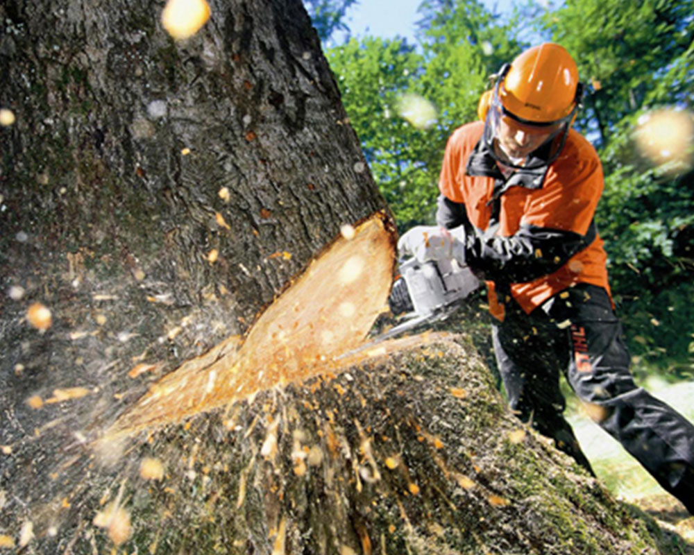 Tree Cutting-Doral FL Tree Trimming and Stump Grinding Services-We Offer Tree Trimming Services, Tree Removal, Tree Pruning, Tree Cutting, Residential and Commercial Tree Trimming Services, Storm Damage, Emergency Tree Removal, Land Clearing, Tree Companies, Tree Care Service, Stump Grinding, and we're the Best Tree Trimming Company Near You Guaranteed!