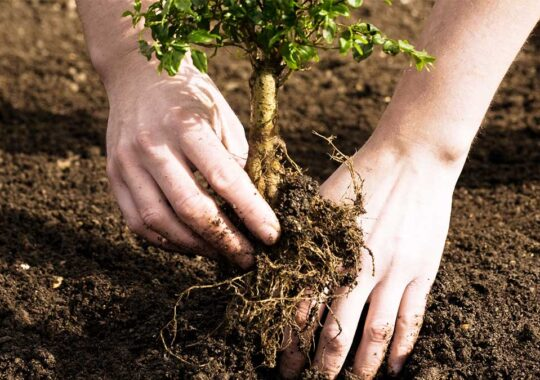 Tree Planting-Doral FL Tree Trimming and Stump Grinding Services-We Offer Tree Trimming Services, Tree Removal, Tree Pruning, Tree Cutting, Residential and Commercial Tree Trimming Services, Storm Damage, Emergency Tree Removal, Land Clearing, Tree Companies, Tree Care Service, Stump Grinding, and we're the Best Tree Trimming Company Near You Guaranteed!