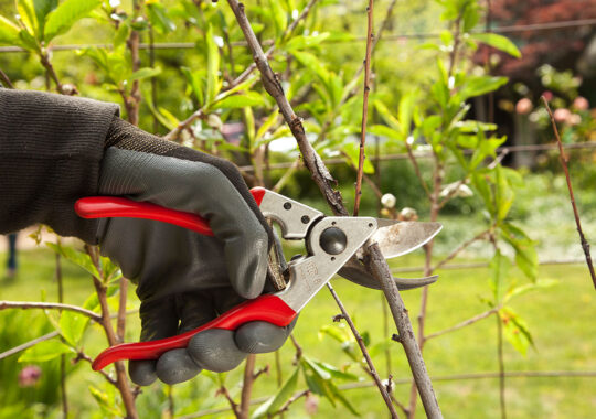 Tree Pruning-Doral FL Tree Trimming and Stump Grinding Services-We Offer Tree Trimming Services, Tree Removal, Tree Pruning, Tree Cutting, Residential and Commercial Tree Trimming Services, Storm Damage, Emergency Tree Removal, Land Clearing, Tree Companies, Tree Care Service, Stump Grinding, and we're the Best Tree Trimming Company Near You Guaranteed!