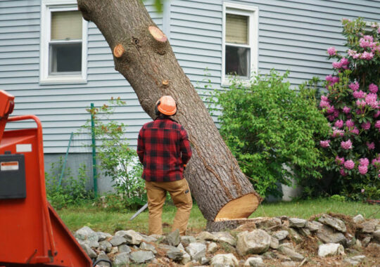 Tree Removal-Doral FL Tree Trimming and Stump Grinding Services-We Offer Tree Trimming Services, Tree Removal, Tree Pruning, Tree Cutting, Residential and Commercial Tree Trimming Services, Storm Damage, Emergency Tree Removal, Land Clearing, Tree Companies, Tree Care Service, Stump Grinding, and we're the Best Tree Trimming Company Near You Guaranteed!