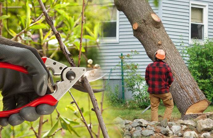 Tree pruning & tree removal-Doral FL Tree Trimming and Stump Grinding Services-We Offer Tree Trimming Services, Tree Removal, Tree Pruning, Tree Cutting, Residential and Commercial Tree Trimming Services, Storm Damage, Emergency Tree Removal, Land Clearing, Tree Companies, Tree Care Service, Stump Grinding, and we're the Best Tree Trimming Company Near You Guaranteed!
